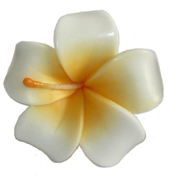 Thai Floating Candles for Pool Asia SPA Flower Frangipani Aromatherapy Relax Candle. 10 Pcs. (Dr Gold Ear Therapy)
