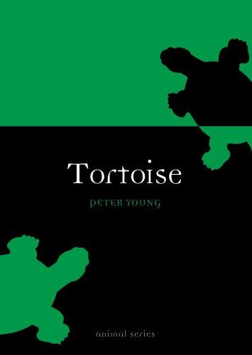 (Tortoise (Animal Series))