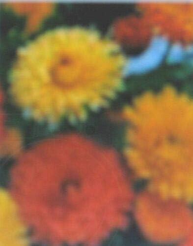 Multitools & Accessories Bon Bon Series 100 Seeds Calendula ...