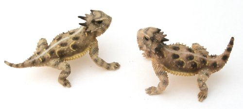 (Pair of Texas Male - Female - Painted Figurine)