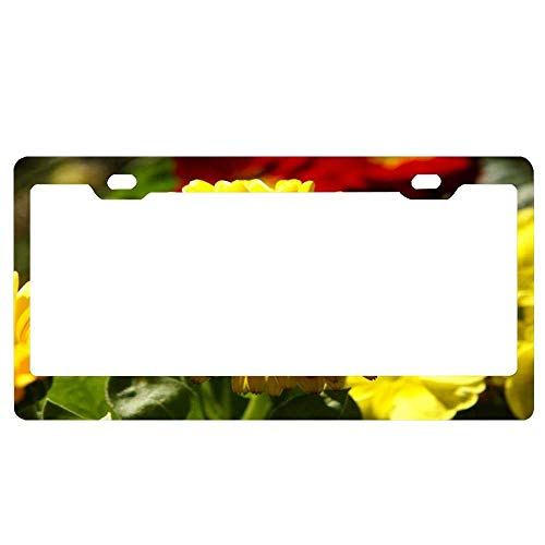 (YEX Abstract Yellow Calendula Pot Marigold License Plate Frame Car License Plate Covers Auto Tag Holder 6
