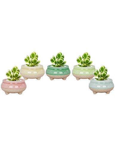 (Dahlia Set of 5 Mini Claw Foot Drip Glazed Ceramic Succulent Planter/Plant Pot/Flower Pot)