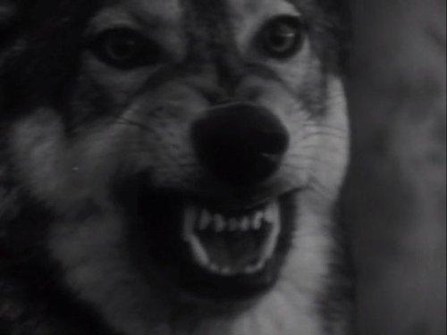 Animal Phobias   Part 1 Of 2
