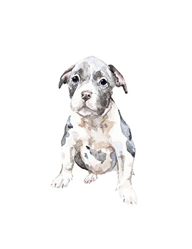 (Limited Edition Pit Bull Dog Print 8.5x11 Watercolor Puppy Pet Portrait)