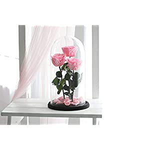 Three Beauty and the beast roses, Live Forever Rose, Enchanted Rose, Rose in glass dome, Forever rose, Rose in Glass, preserved rose, preserved flower, Pink rose 48