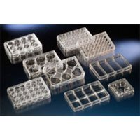 Nunc Polycarbonate Tissue Cell Culture Insert for Use with Multidish 6, 8.0µm Pore Size (Case of 24) - Nunc Cell Culture Inserts