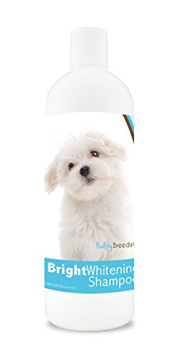 (Healthy Breeds Dog Bright Whitening Shampoo For Maltese - For White, Lighter Fur - Over 150 Breeds - 12 Oz - With Oatmeal For Dry, Itchy, Sensitive, Skin - Moisturizes, Nourishes Coat)