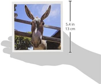 6 x 6 inches set of 6 Greeting Cards 3dRose Donkey in a farm 2 gc/_9935/_1