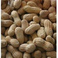 Wingfield Farm 25 Pound Virgin in Shell Peanuts (Two 25lb Bag) by Wingfield Farm (Image #1)