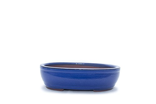 Bonsai Tree Pot 7 Inch Blue Glazed Oval shape Oval Glazed