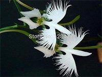 World's Rare Flower Japanese Radiata Seeds for Garden & Home Planting White Dove Orchids Seeds, 50seeds/bag