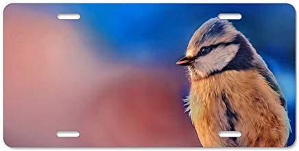 Voicpobo Animal Bird Colorful Eurasian Blue Tit License Plate Frame Decorative Front Vanity Plate Funny Car Tag Holder 6x12 Vanity Gifts