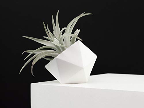 Modern White Geometric Icosahedron Succulent Air Plant Planter and Vessel Catchall dish