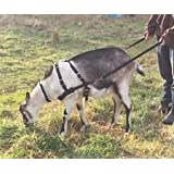 Goat Pulling Harness with Tugs Pulling Carts, Wagons Brush Work (Standard, Red)