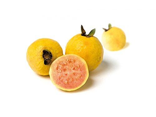 Pink Guava Fruit Puree - 6 packs x 2.2 lb (case)