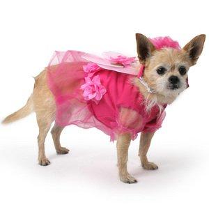 Flower Fairy Dog Costume-S-  sc 1 st  Amazon.com & Amazon.com : Flower Fairy Dog Costume-S- : Pet Costumes : Pet Supplies
