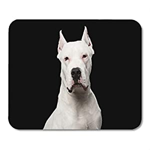 "Semtomn Gaming Mouse Pad Pet Portrait of Purebred Dogo Argentino Dog Black Studio Adorable Adult Animal Breed 9.5""x 7.9"" Decor Office Nonslip Rubber Backing Mousepad Mouse Mat 1"