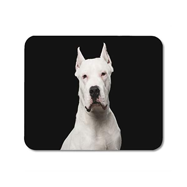 """Semtomn Gaming Mouse Pad Pet Portrait of Purebred Dogo Argentino Dog Black Studio Adorable Adult Animal Breed 9.5""""x 7.9"""" Decor Office Nonslip Rubber Backing Mousepad Mouse Mat 1"""