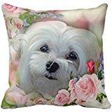 Snowdrop The Maltese Cushion Throw R82b99f2a266b413abe63ff42b25bf639 I5fqz 8byvr Pillow Case