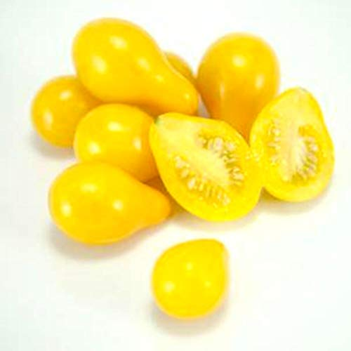 Tomato Yellow Pear Seeds by Zellajake Many Sizes Heirloom Tiny Cherry Rare #216 by 6SHTN (Image #1)