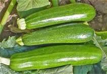 zucchini-squash-green-fresh-produce-fruit-vegetables-per-pound