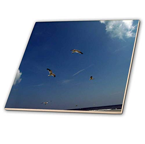Trio Gull Sea (3dRose Dawn Gagnon Photography - Beach Scenes - Seagulls in flight, a trio flying against a vivid blue beach sky - 4 Inch Ceramic Tile (ct_165598_1))