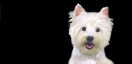 Airbrushed License Plates - West Highland Terrier License Plate,Personalized Airbrushed Westie Novelty License Plate Custom Decorative Airbrush Front Plate with frame & cover included - 1440
