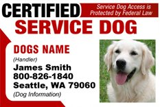 Amazon.com : PERSONALIZE Dean & Tyler CERTIFIED SERVICE DOG ID ...