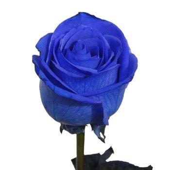 amazon com 2 dozen farm fresh blue roses bouquet by justfreshroses