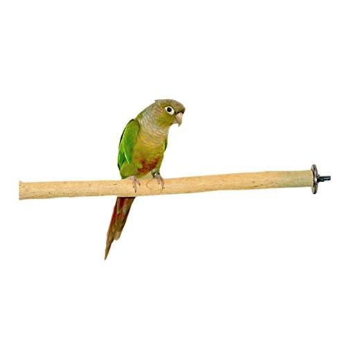 Birds LOVE Small Bottlebrush Cage Perch