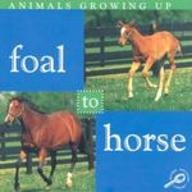 Growing Foal (Foal to Horse (Animals Growing Up.))