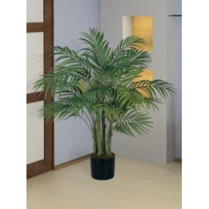 amazon com seeds and things 10 areca palm plant seeds flowering