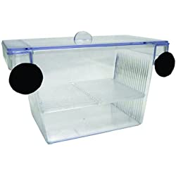 YML Fish Hatchery Tank, 5 by 2.75 by 2.75-Inch