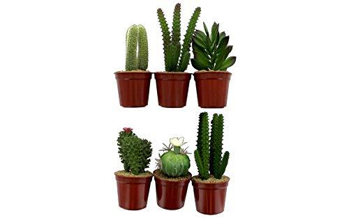 Darice 30045910 - Mini cactus suculentos, 19 cm, color verde