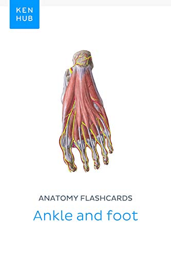 Anatomy flashcards: Ankle and foot: Learn all bones, ligaments and muscles on the go (Kenhub Flashcards Book 42)