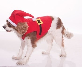 Sheik Fancy Dress (Santa Suit Pet Costume - Small)