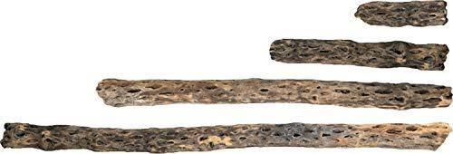 - Galapagos 05272 Cholla Wood for Aquarium, 24
