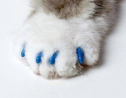 Soft Claws Nail Caps - Small - Blue by Smart Practice