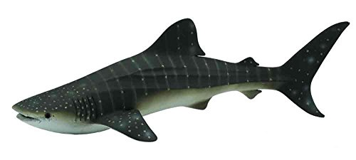 (CollectA Sea Life Whale Shark Toy Figure - Authentic Hand Painted)