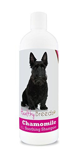 Healthy Breeds Chamomile Dog Shampoo & Conditioner with Oatmeal & Aloe for Scottish Terrier  - OVER 200 BREEDS - 8 oz - Gentle for Dry Itchy Skin - Safe with Flea and Tick Topicals
