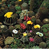 Cactus Mix Seeds - 200 mg - Fascinating!