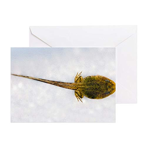 CafePress Young Frog At 10 Weeks Greeting Card, Note Card, Birthday Card, Blank Inside Glossy