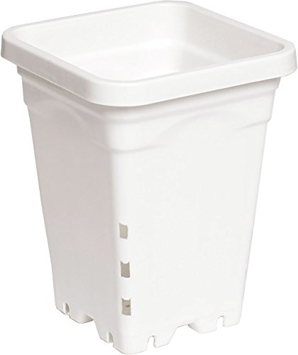 Active Aqua 5″x5″ Square White Pot, 7″ Tall, (Pack of 100) Review