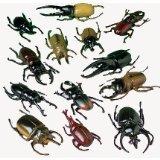 Bugs (dozen)