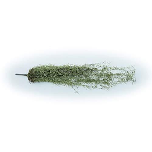 人工観葉植物 スパニッシュモスハンキングブッシュグリーン77(12個セット) ba660 (代引き不可) インテリアグリーン 造花 HANGING BUSH B07T34YNV6