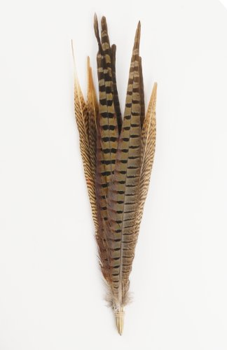 Zucker Feather Products Assorted Natural Pheasant Tails Feathers, 14 to18-Inch (Pheasant Feathers)
