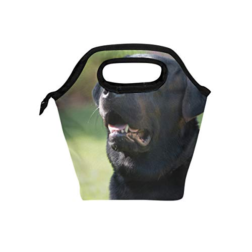 Lunch Bag Labrador Black Pet Strange Insulated Lunchbox Thermal Portable Handbag Food Container Cooler Reusable Outdoors Travel Work School Lunch -