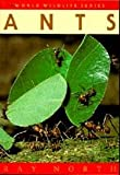 Ants, Ray North, 1873580258