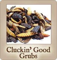 Cluckin\' Good Grubs - Dried Black Soldier Fly Larvae - 1.25 lbs