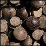 WIDGETCO 7/16'' Walnut Button Top Wood Plugs(QTY 5,000)